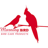 Morning Bird